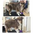 Marlborough pet grooming