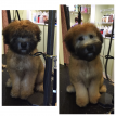 Dog grooming Marlborough