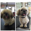 Marlbrough Dog Grooming